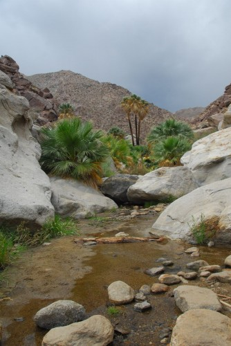 The oasis at Borrego Springs Canyon.