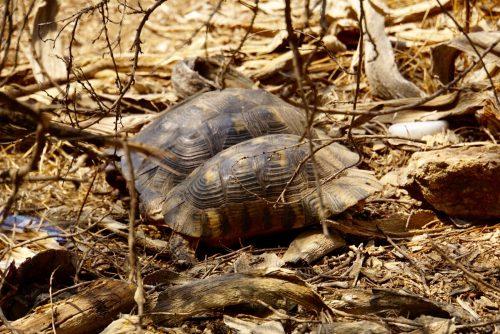 Skildpadder i det fri.