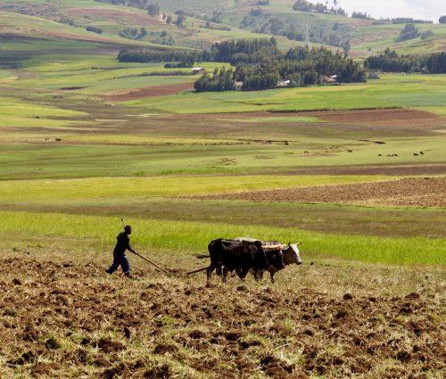 En blandt mange hårdtarbejdende landmand!
