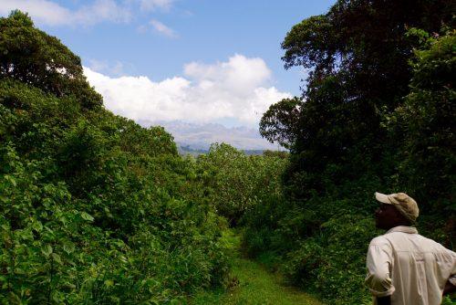 Junglevandring med udsigt til toppen af Mt. Kenya.