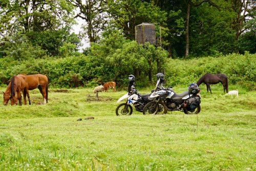 Vi lå placeret lige op til dyrenes græsmark.