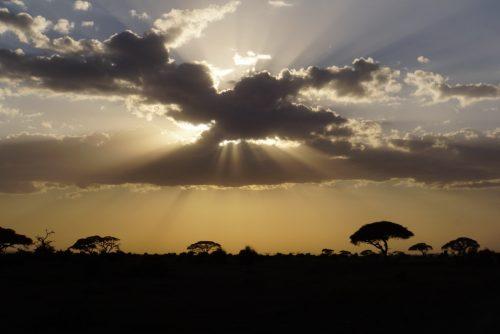 Savannens smukke solnedgang.