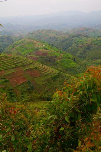 Næsten alle bakker udenfor Rwandas nationalparker er udnyttet til landbrug - Rwanda har en af de højeste befolkningstætheder i Afrika.