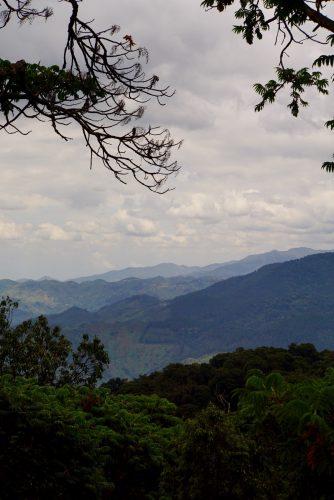 Fordi Nyungwe Forest er nationalpark, har bakker fået lov til fortsat at være skovklædte.