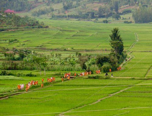 Straffefanger på vej fra samfundstjeneste i Rwanda. Adskillige af disse har formentlig været involverede i folkedrabet.