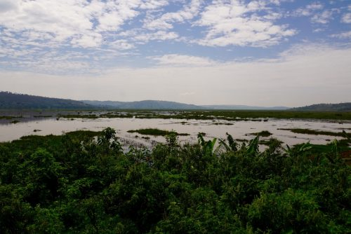 En sjælden sump i Rwanda. Men bakkerne er stadig i baggrunden.