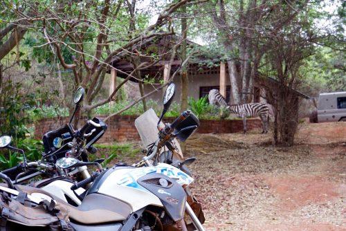 Zebrabesøg på campingpladsen.
